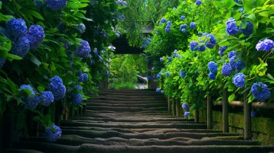 Beautiful-nature-green-road-wallpaper